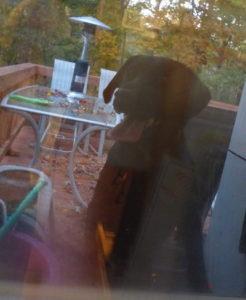 Skipper Peeking in the Window